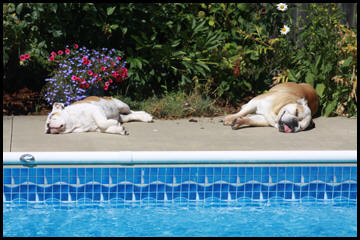 Dogs Sun Bathing